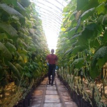 Pusch Brothers Greenhouse